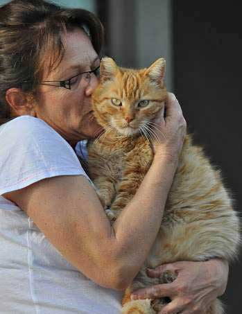 Marvin was feral cat but became a loving domestic cat