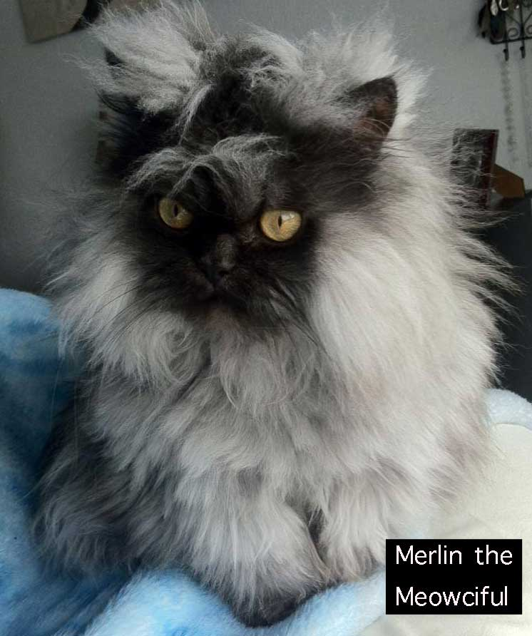 Merlin the Meowciful