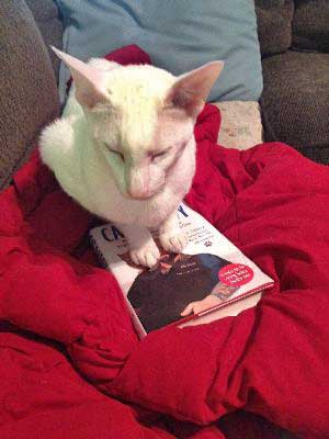 oriental shorthair cat with book