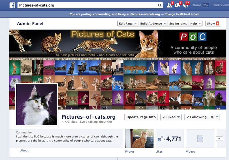 Pictures of cats org Facebook