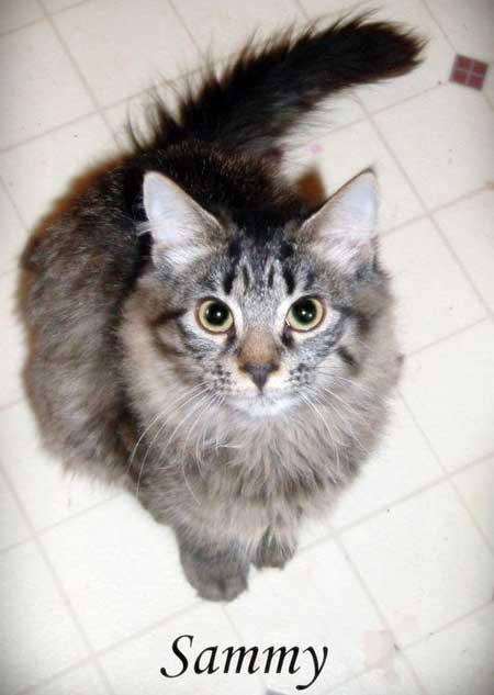 Sammy a tabby cat who predicted an earthquake
