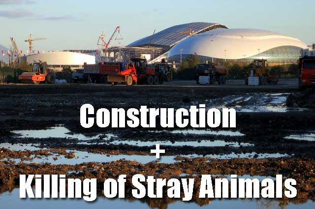 Sochi Olympics construction and killing of stray animals cats and dogs