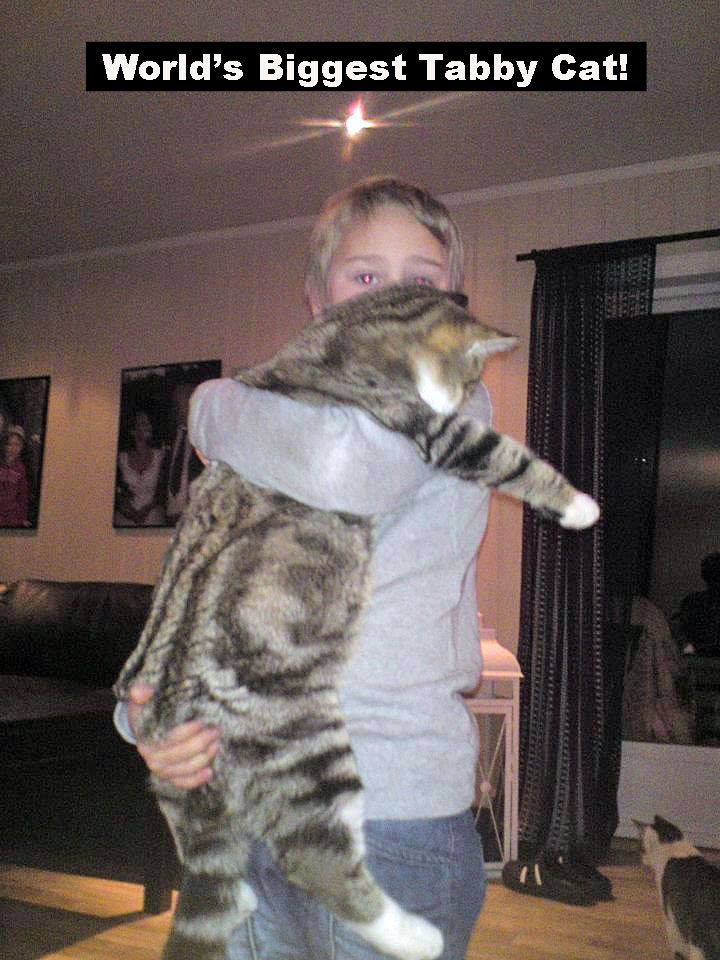 World's biggest tabby cat