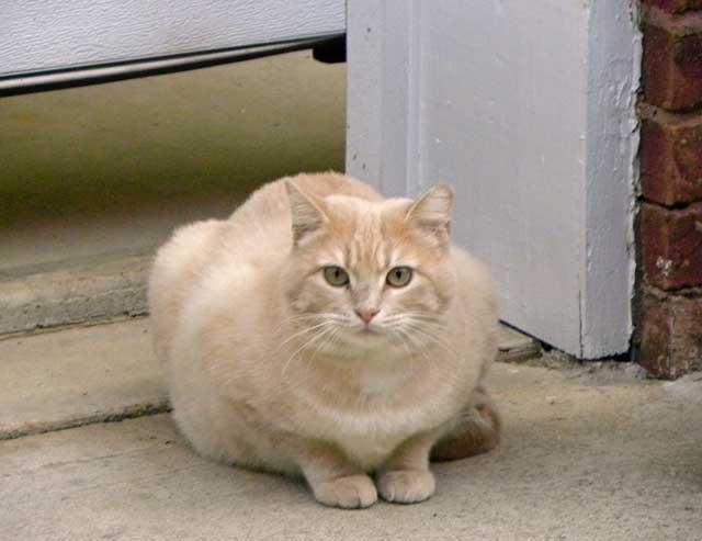 Alpha cat