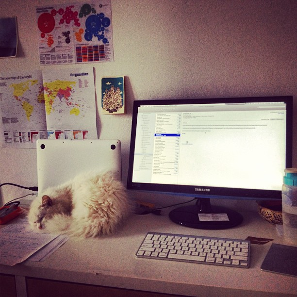cat on desk