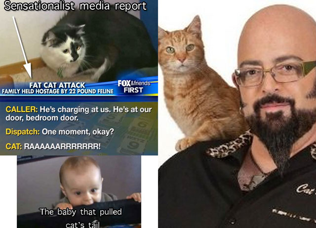 jackson galaxy advocate for lux the violent-cat