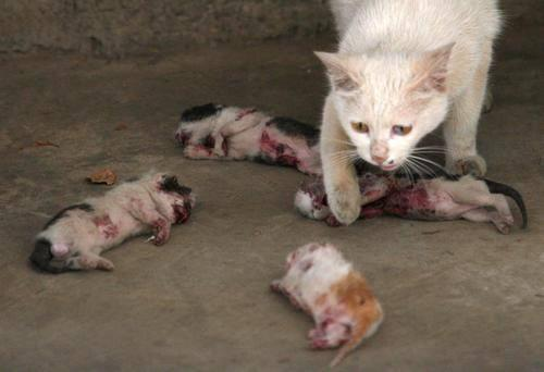 mother cat tries to revive her killed kittens