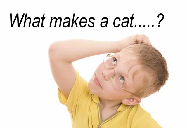 What makes a cat....?