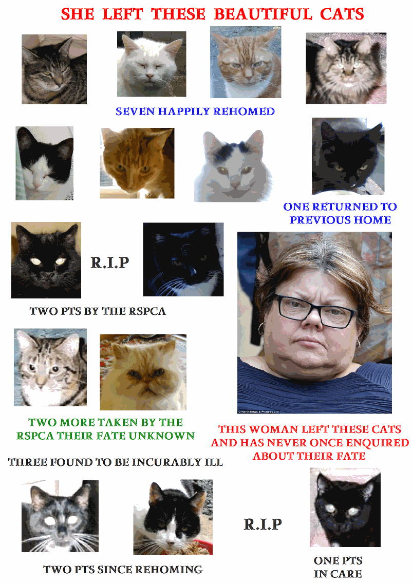 Woman who abandoned many cats
