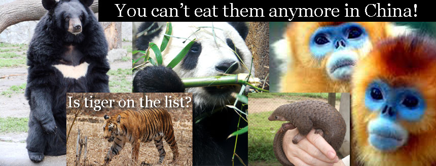 Chinese can no longer eat rare species of wild animal