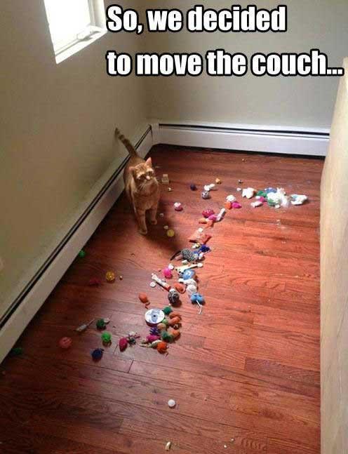 Cat toys under sofa