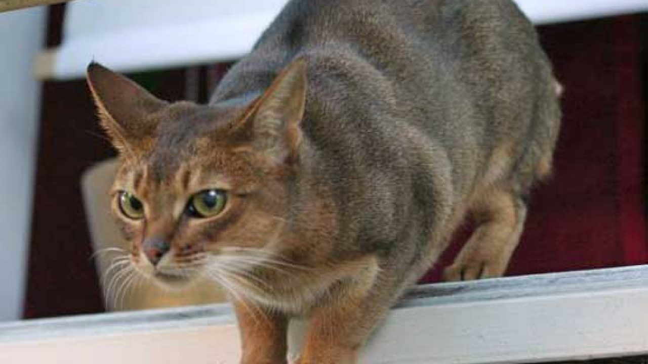 Pictures of Cat Breeds – PoC