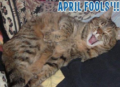 April fool cat