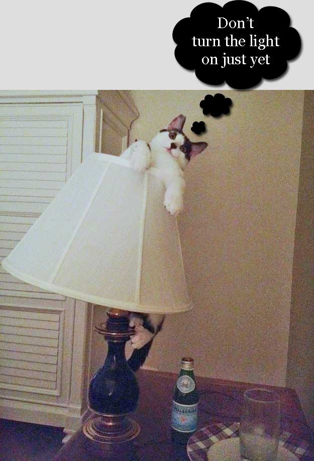 cat climbs a stand lamp