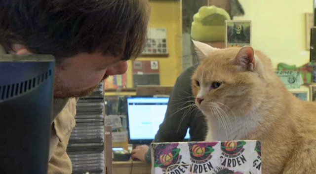 Music store cat