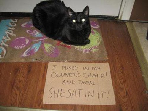 naughty cat in their own words15