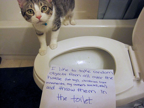 naughty-cat-in-their-own-words3