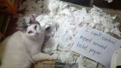 naughty cat in their own words6