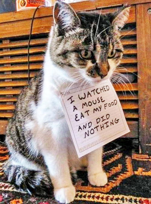 naughty cat in their own words7