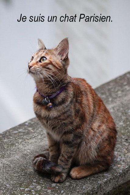 Cat in Paris France