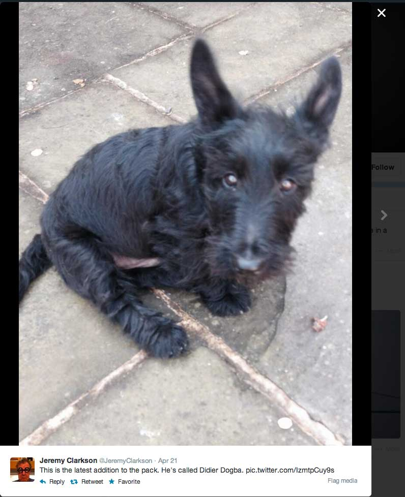 Scottish terrier called Didier Drogba-Black dog given name of black football