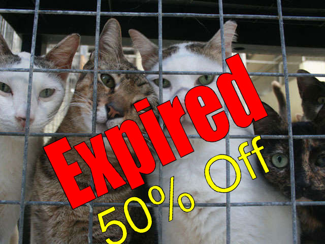 Shelter cats that are due to be euthanised