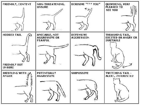 Feline Tail Talk