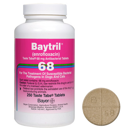 baytril antibiotic for cats