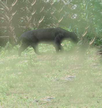 Black Cat Sightings Uk