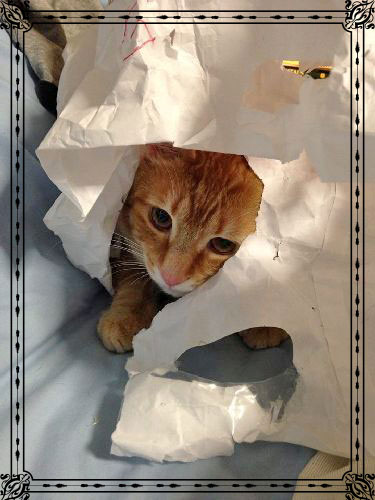 Cat in paper