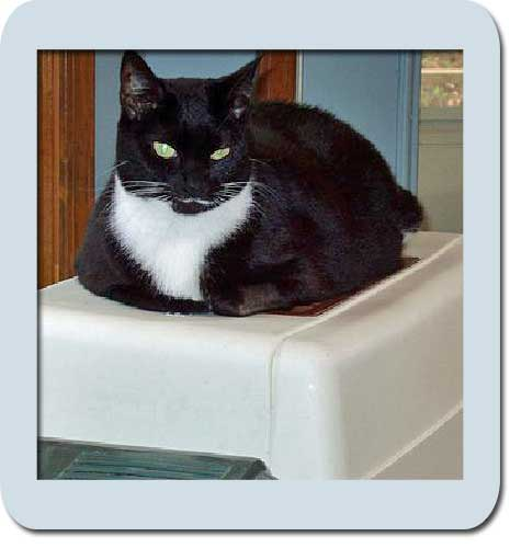Cat on litter box