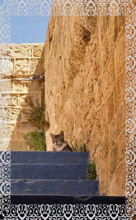 Feral cat Jaffa Tel Aviv Israel