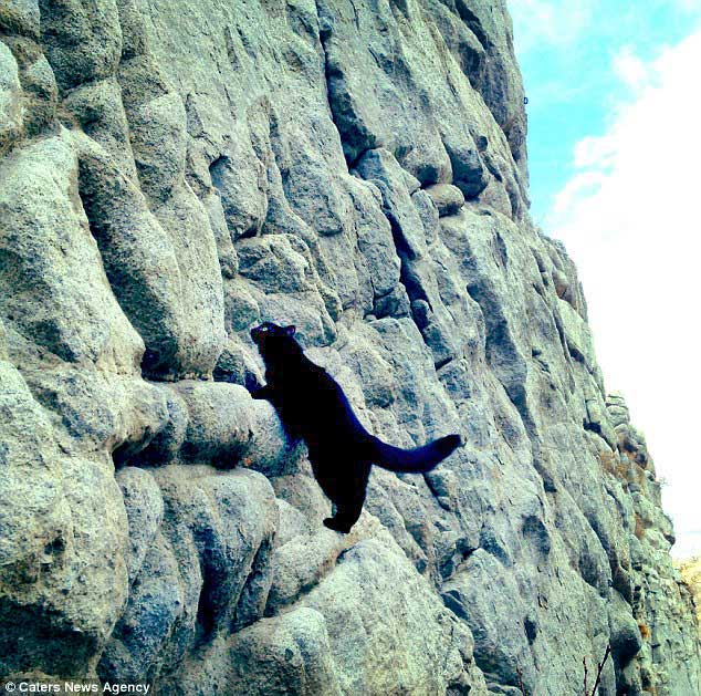 Millie the cat rock climbing