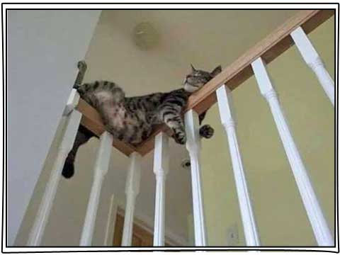 Tabby cat on stairs