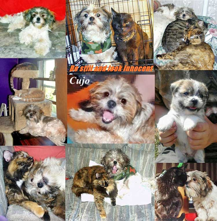 Cujo a dog raised by cats