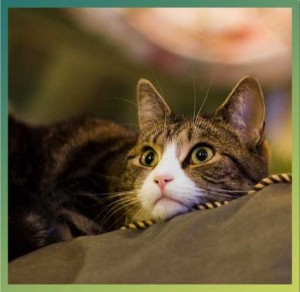 Anxious looking cat