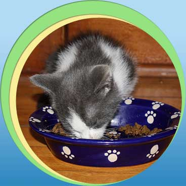 Mainstay Cat Food Ingredients