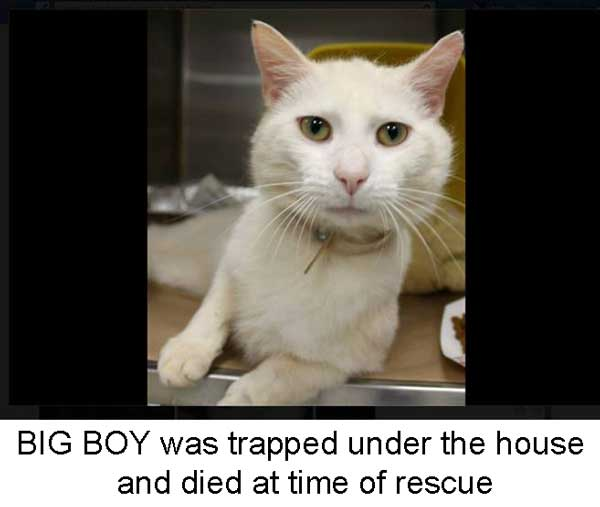 cat rescued died later