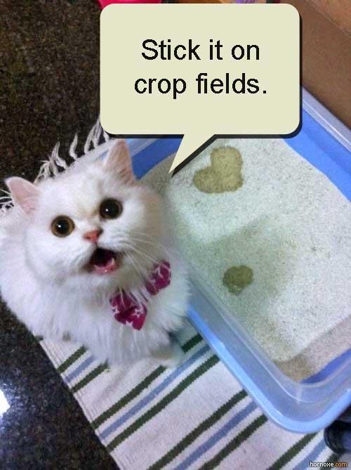 cat urine as rodent deterrent on crop fields