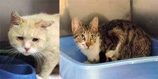 Two more cats rescued from Westberry's hoarding