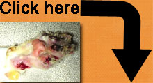 click-here-declawing