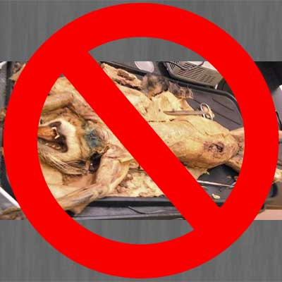 Dissecting cats in classrooms must stop