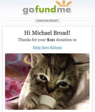 donation from PoC pictures of cats org