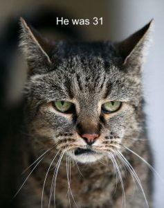 Elderly cat care