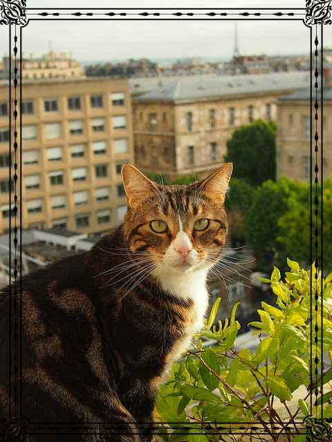 Feline high-rise syndrome