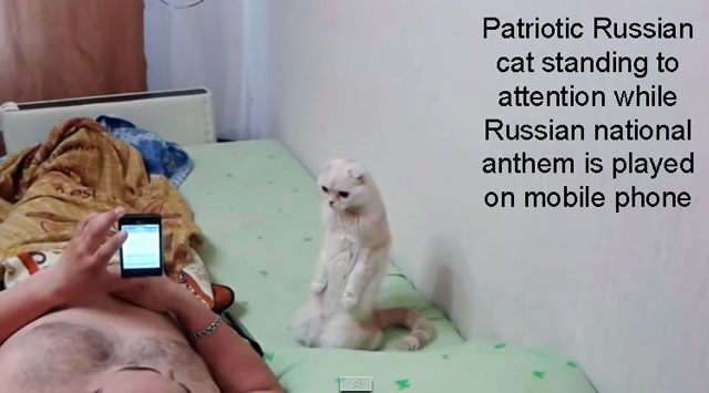 Patriotic Russian cat