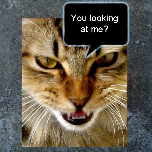 Staring at a cat