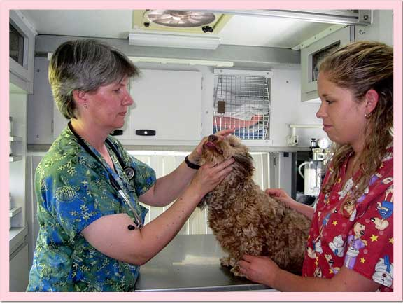 Veterinary nurse training
