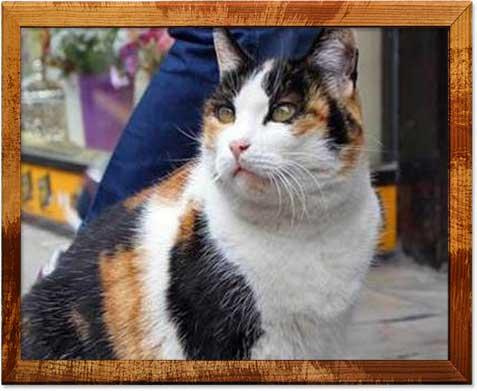 Bolu Beyi Shopping Arcade cat