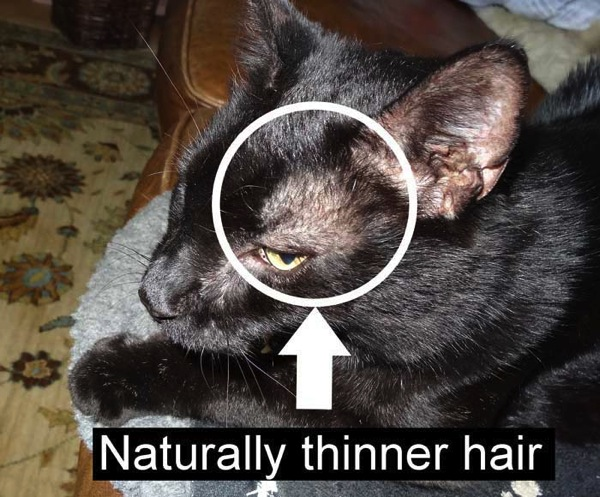 Cat Is Thin And Losing Hair